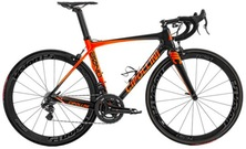 CIPOLLINI Bond Orange Fluo...